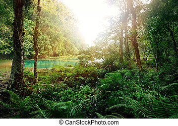 Mysterious Mayan jungle in the national park Semuc Champey...