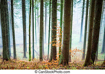 Mysterious mist in the autumn forest