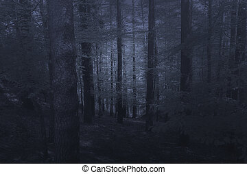 Mysterious misty forest
