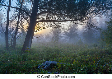 Mysterious morning time in swamp area. Landscape
