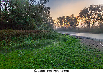Mysterious morning time in swamp area
