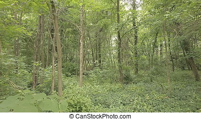 Mysterious Overgrown Forest - Panoramic pan shot of...