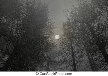 pinewood foggy full moon - Mysterious pinewood foggy full ...