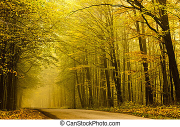 Mysterious road in autumn forest.