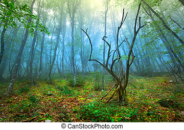 Mysterious spring forest with blue fog