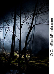 Mysterious Trees in a Haunted Forest
