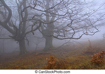 Mysterious trees in the misty forest
