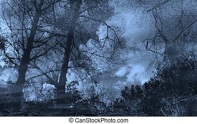 mysterium, skog