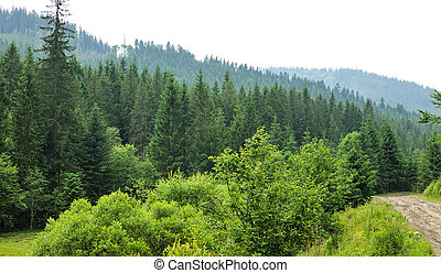 Mystery forest with fir trees and road