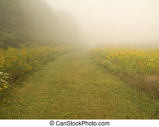 Mystery Path - This is a shot of a foggy path in a meadow in...