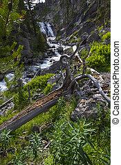 Mystic Falls Yellowstone National Park