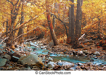 mystic foggy forest with creek in autumn