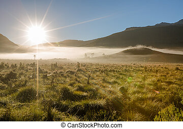 Mystic morning fog