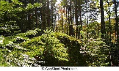 Epic Mountain Forest - Mystic Mountain Forest. Green Forest....