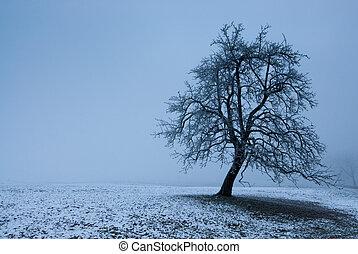mystic tree in fog on a dark winter day