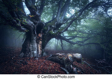 Mystical autumn forest in fog in the morning. Old Tree