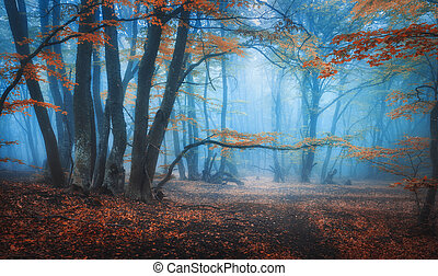 Mystical autumn forest with trail in blue fog. Fall colors