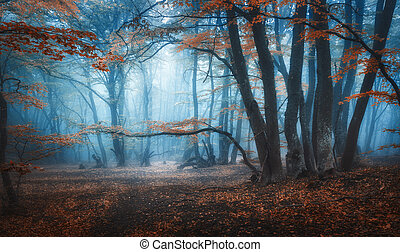 Mystical dark autumn forest with trail in blue fog
