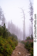 Mystical fog in the forest at autumn