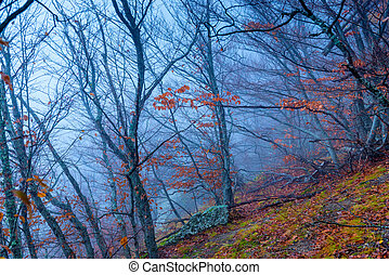 Mystical gloomy forest in the mountains in autumn in the fog