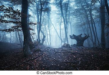 mystical, mørke, efterår skov, hos, trail, ind, blå, tåge