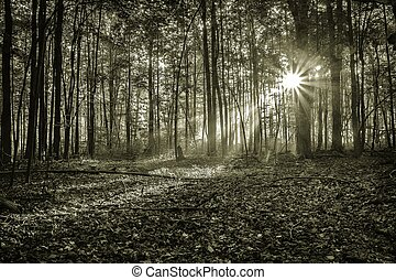 Mystical Morning Sunrise