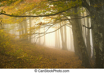 Mystical path - Dreamy autumnal forest path inviting you on ...