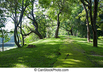Mystical path in tropical forest - Mystical path covered by...
