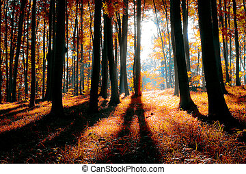 mystical, skov