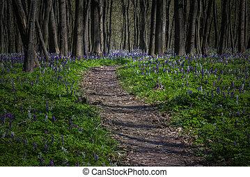mystiek, lente, donker, bospaden