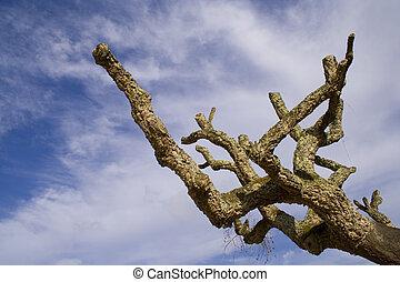 mystique, arbre, -, concours