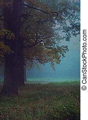 mystique, forêt automne
