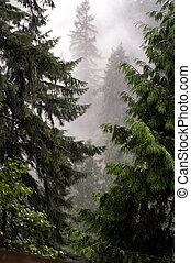 mystique, forêt