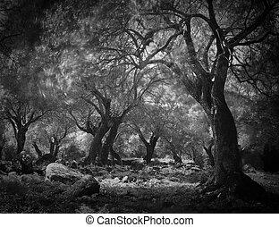 mystiske, mørke, skov