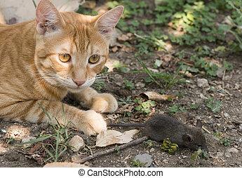 mysz, ogród, kot