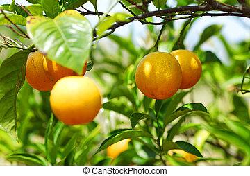 nära, citron, uppe