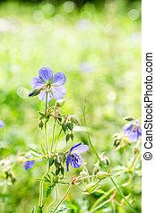 nära, fält, Blomstrar, lin, Uppe