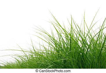nära, gräs, grön, uppe