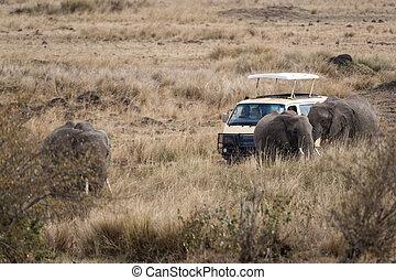 nära, Möte, Elefanter
