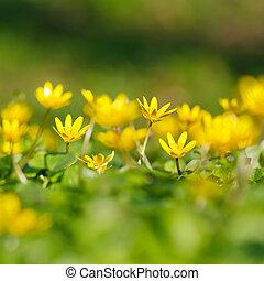 närbild, av, gul blommar
