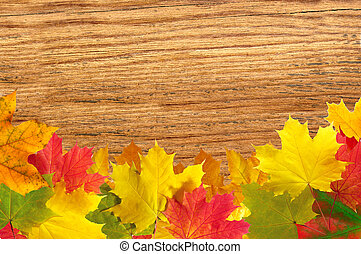 närbild, färgrik, bladen, Struktur, höst, ved, bakgrund,  över, Lönn