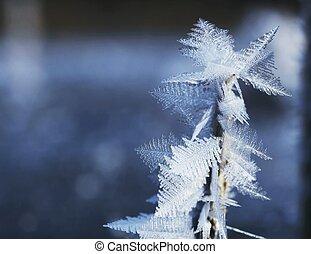 närbild, frost