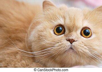 närbild, katt