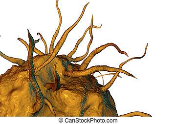 närbild, macrophage, cell, synhåll
