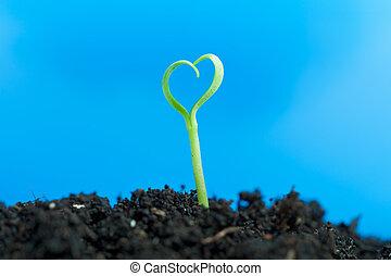 närbild, på, ung, planta, växande, ute, av, smutsa