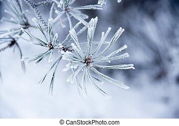 nåle, ind, vinter
