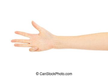 négy, kiállítás, womans, ujjak, kéz