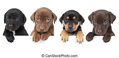 négy, kutyus, transzparens, felül