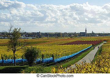 német, wineyards