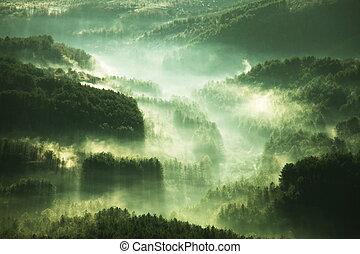 névoa, floresta